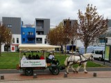 foire-aux-plantules-2013-21.jpg